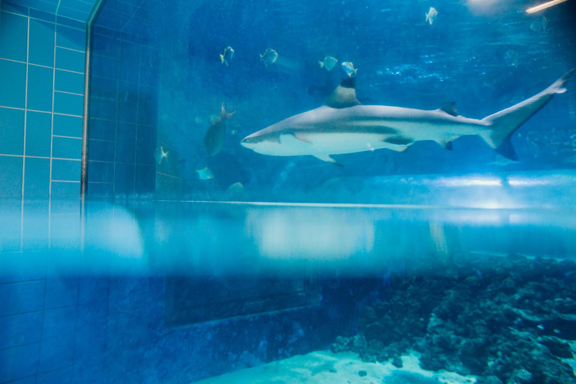 Sauna sharks Gymshark Official